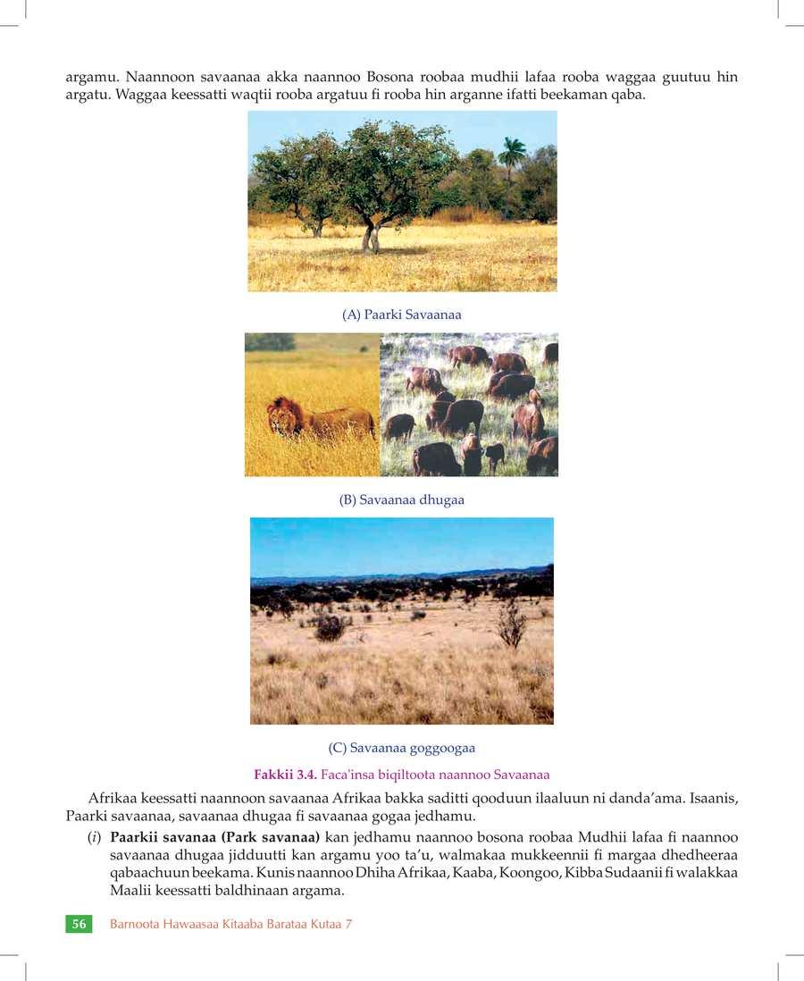 Social Studies grade 7                                  page 62